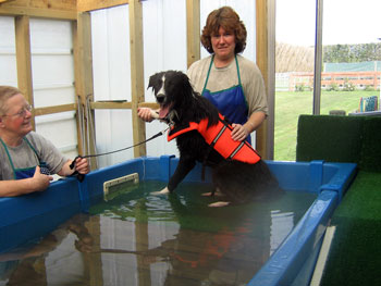 Dog swimming for fun, recovery, rehabilitation or fitness